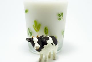 ミルクと乳牛