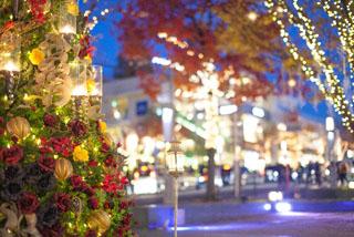 クリスマスツリーのある街角