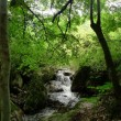 京都大原の自然