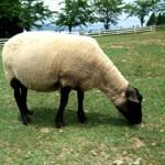 眠れないときどうする!寝る方法は?羊はダメ?