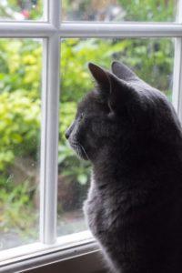 家にいる猫